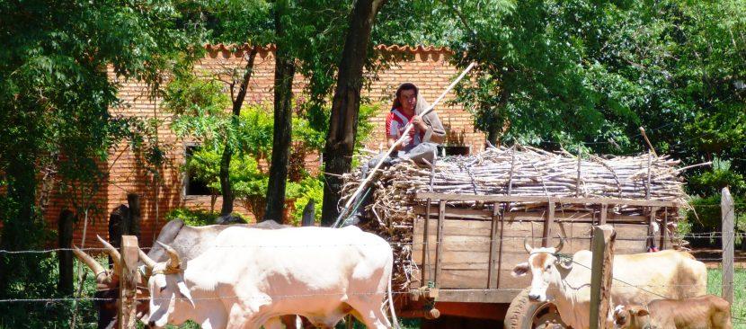 Carreta de caña de azúcar llevada por animales
