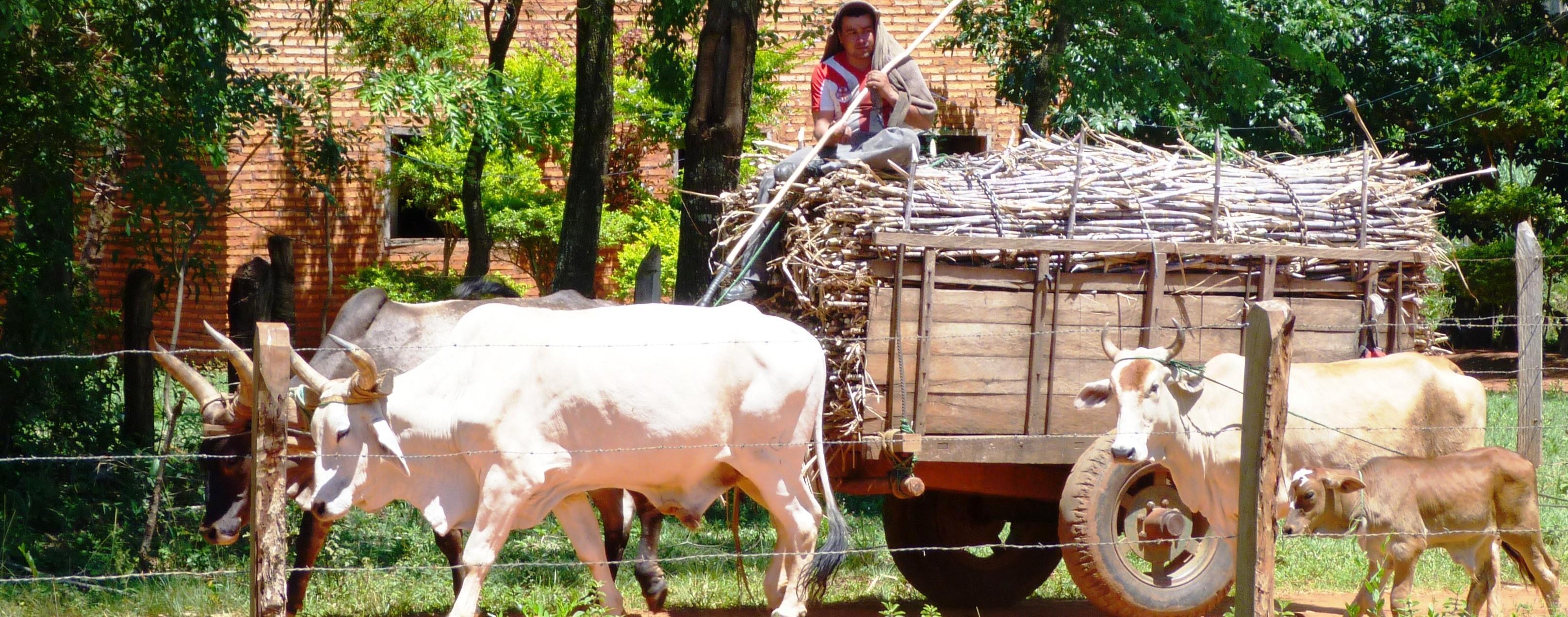 El Comercio Justo apoya la lucha del campesinado por sus derechos