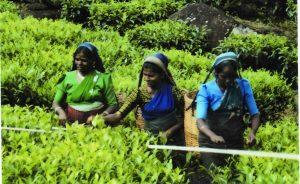 srilankarecolectoras-copia