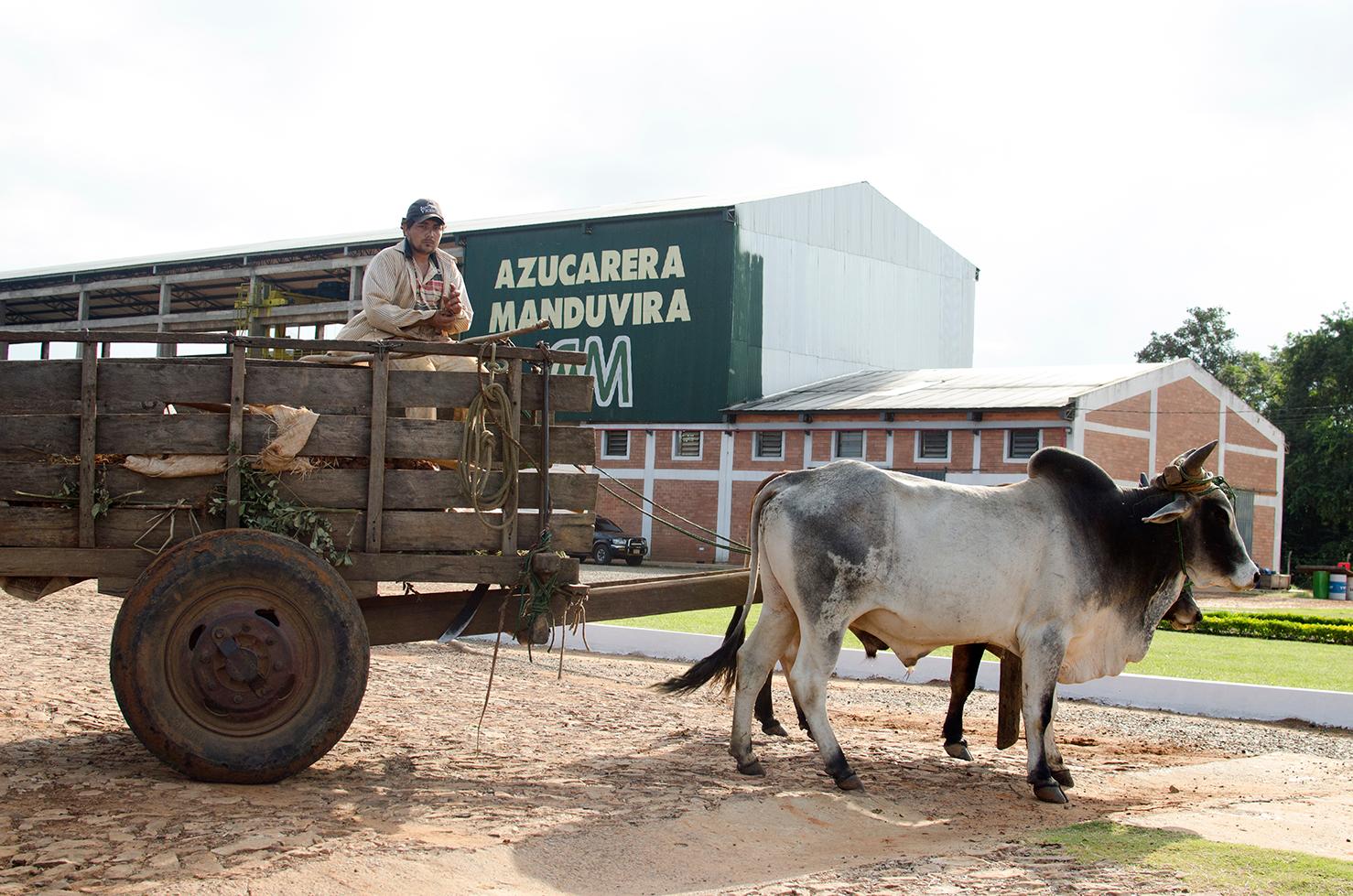 Manduvirá, donde la lucha campesina cumplió su sueño y el Comercio Justo lo mantiene