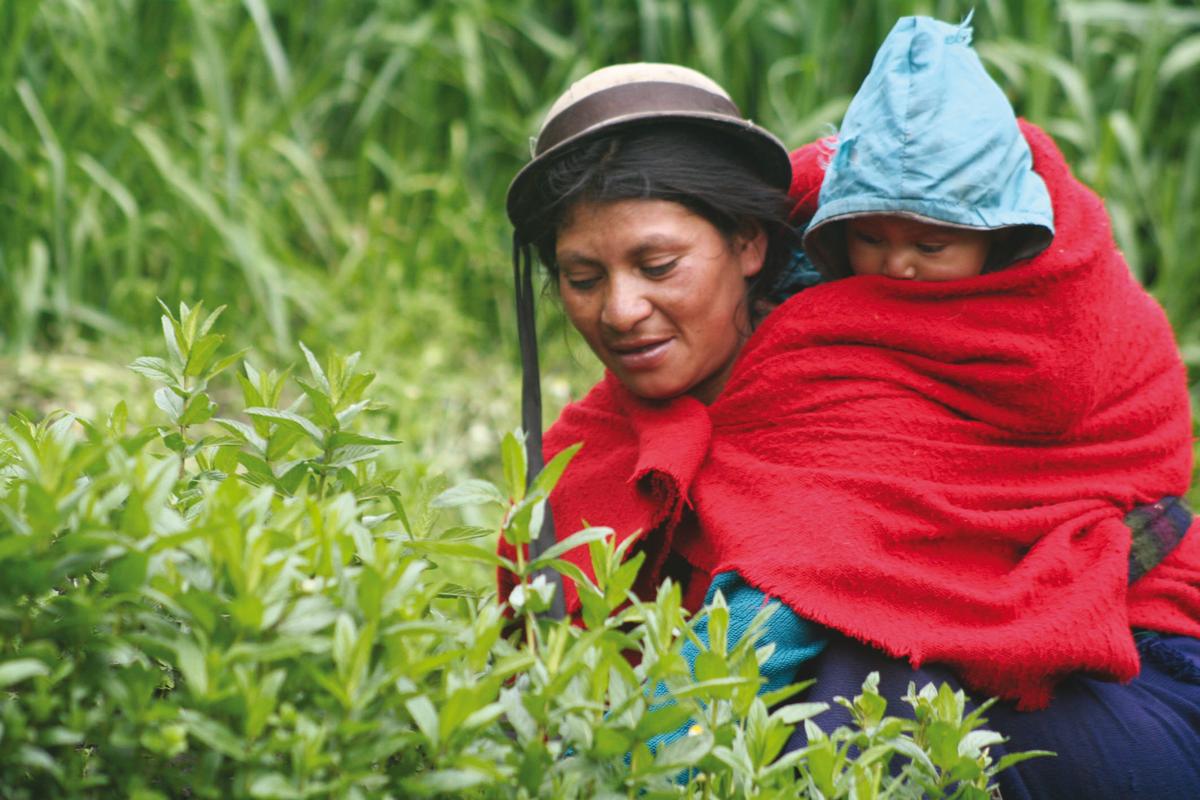 Jambi Kiwa o las plantas que curan. Una cooperativa de éxito de mujeres ecuatorianas.