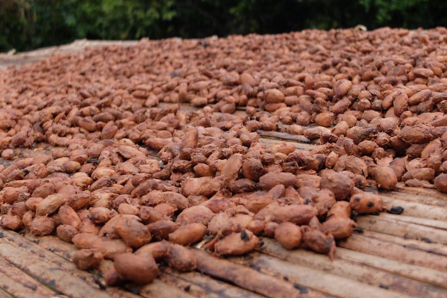 Nuevo informe sobre la realidad del sector del cacao
