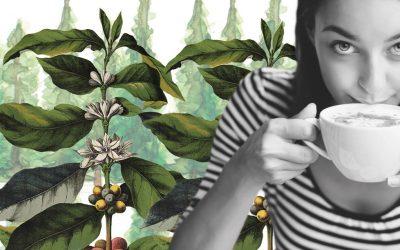 ¿Podemos cuidar el medio ambiente con una taza de café?
