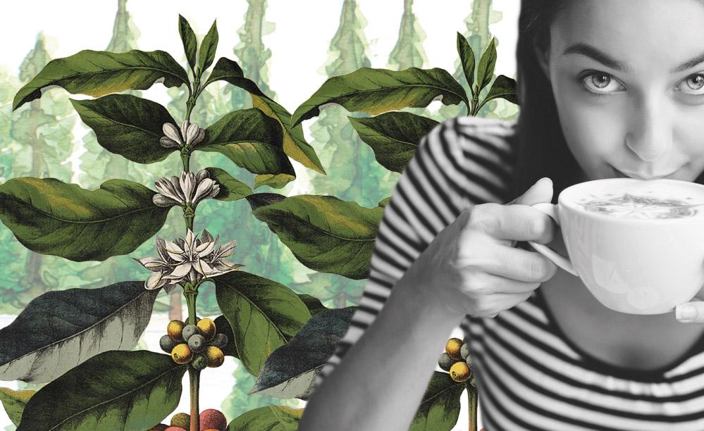 Café y Medio Ambiente