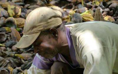 Paso atrás en la lucha de los productores de cacao
