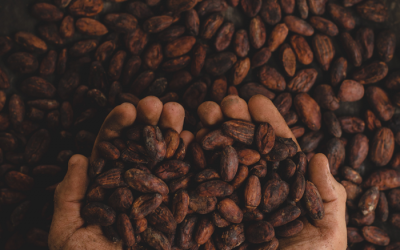 La lucha de los productores de cacao